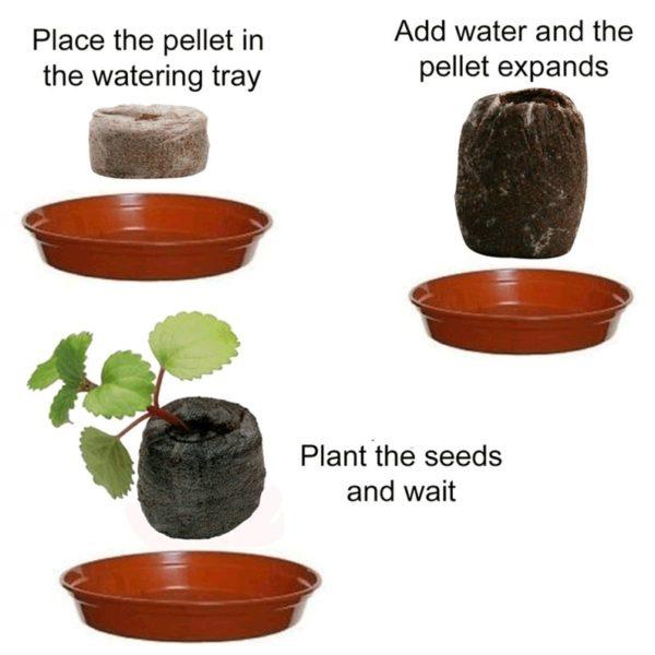 Seeds flower planty seeds